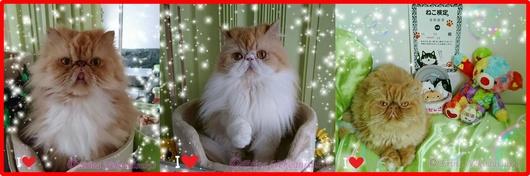 2赤枠Ⓒ3匹とエポと猫検定キラキラ_20171227_012532-side.jpg
