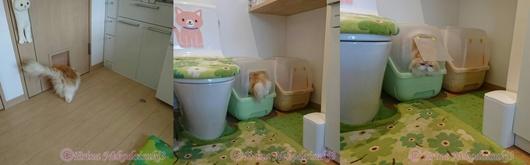3連結モコトイレドアーくぐるトイレ出入り.JPG