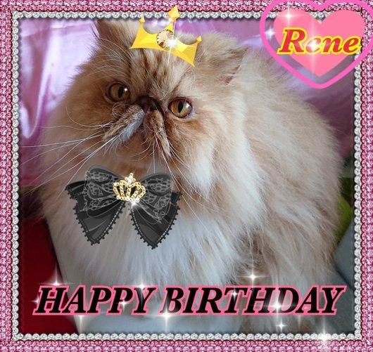 M家の猫沢山さまよりルネちゃんの誕生日プレゼント画像5歳.jpg