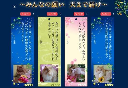 PEPPY2019-7月星に願いを大作戦4匹の願い.JPG