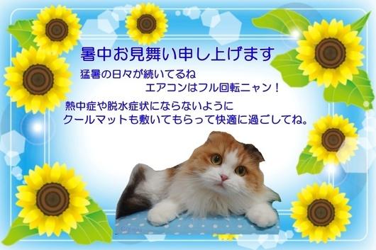 SeesaaブログⒸErina暑中お見舞いひまわりとレナちゃんクールマットの上.jpg